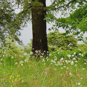 Wildflower Meadow Mixture Seeds - Shade 80/20