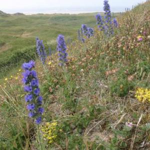 Wildflower Meadow Mixture Seeds - Coastal 80/20