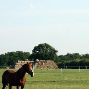 Economy Horse Paddock Grass Seed