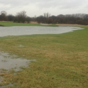 Waterlogged and Wet Soils Grass Seed