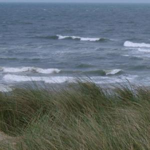 Coastal Sites - Salt Tolerant Grass Seed