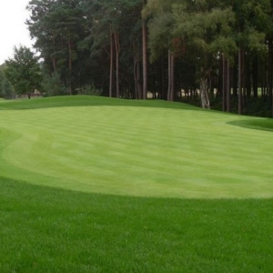 Bowling Green Grass Seed