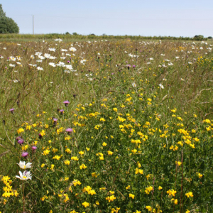 CSS Wildflower Meadow, also suitable for AB8