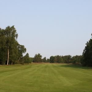 Golf Tees & Fairways Grass Seed (without ryegrass)