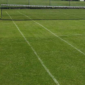 Cricket and Tennis Grass Seed