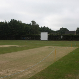 Wicket & Tennis Renovator Grass Seed