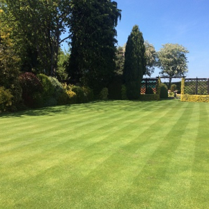 Quality Fine Lawn Grass Seed