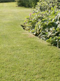 Use our lawn seed selector