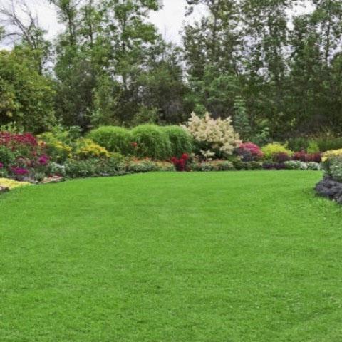 Fertiliser and moss control